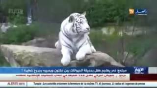 حيوان النمر يفترس طفل عمره 8 سنوات بحديقة بن عكنون كان يلعب بالقرب من قفصه