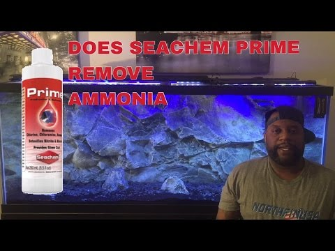 IFG | Seachem Prime: Does Prime Remove Ammonia From Aquariums