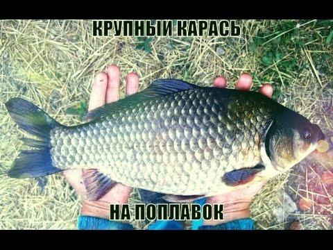 секреты рыбалки мега крупный карась на поплавок _ fishing secrets mega big carp on the float