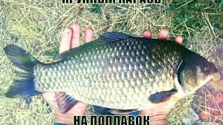 секреты рыбалки мега крупный карась на поплавок _ fishing secrets mega big carp on the float.