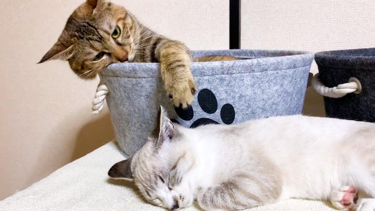 お姉ちゃん猫の横で爆睡する子猫♡