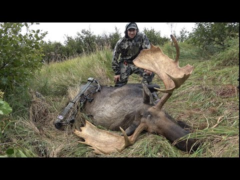 Archery Moose Hunt 2 YARD SHOT!!! – Stuck N the Rut 139
