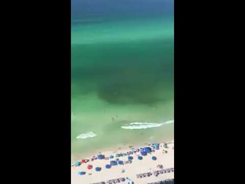 Angie Ward - Shark Circles Unsuspecting Swimmer On Florida Beach!