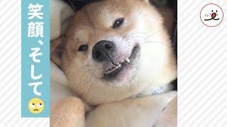 笑顔でぐっすり💤でも、ときどき…😳【PECO TV】 thumbnail