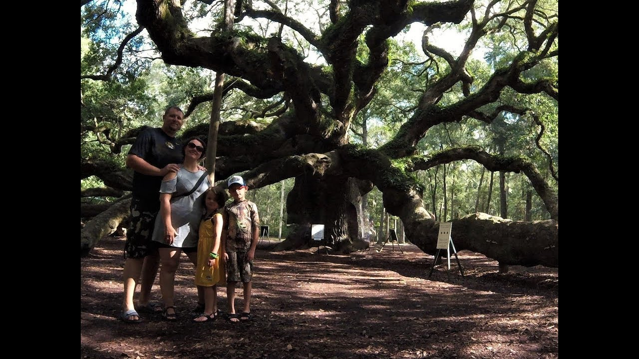 Angel Oak Tree, Johns Island, SC: Road Life More Life