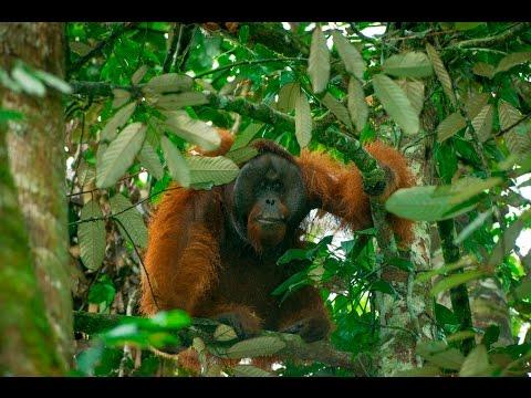 Wildlife Rescue Unit - Orangutans