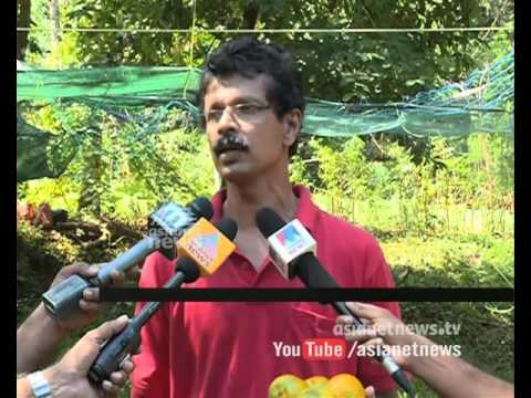 Orange farming in house compound in Muttom Thodupuzha Idukki