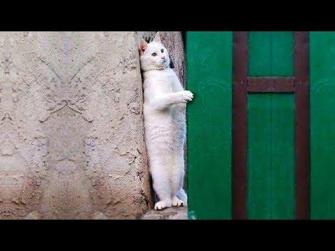 Essayer De Ne Pas Rire - Vidéos Drôles de Chats et de Chiens #54