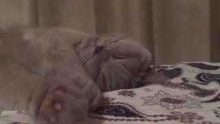 Иногда и кот храпит,как человек