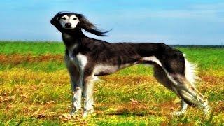 Nadir Bulunan 10 Köpek Türü