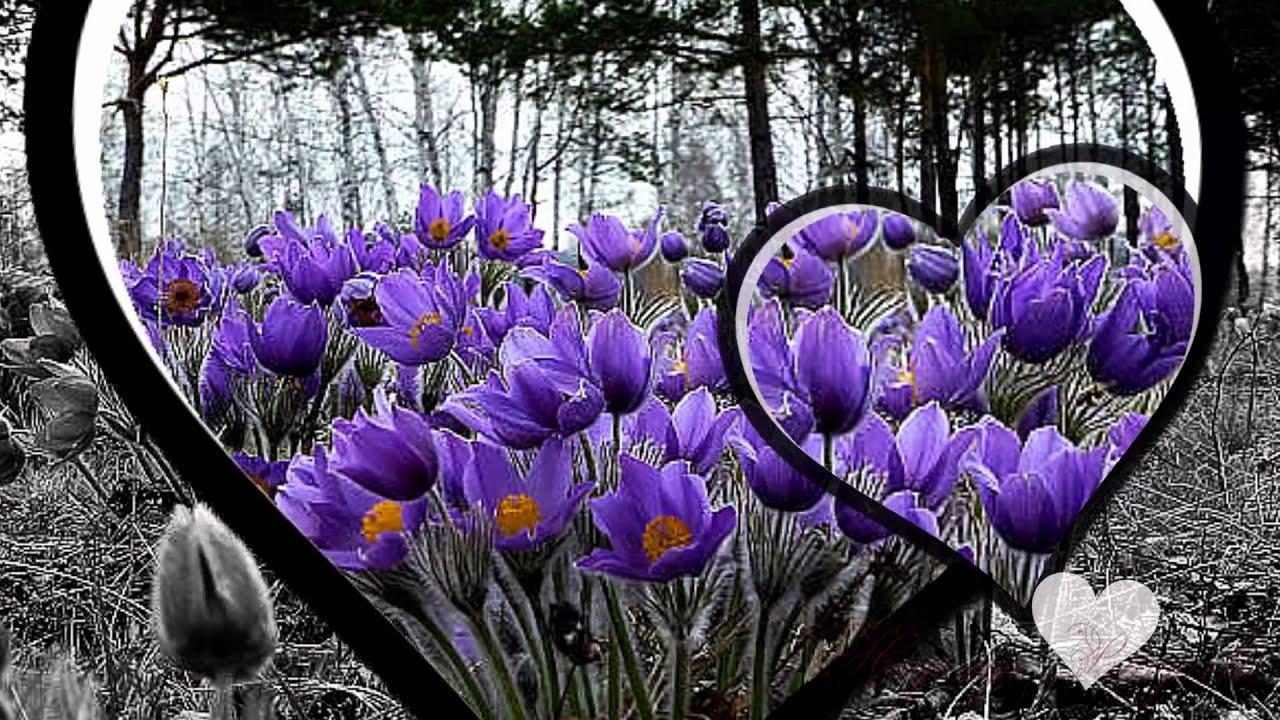 Цветы . Красивые цветы. Красивая музыка - YouTube