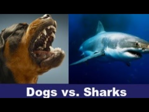 Ronnie And TKras - VIDEO: Dogs Fight Off Shark, Save Owner! YES, For Real!