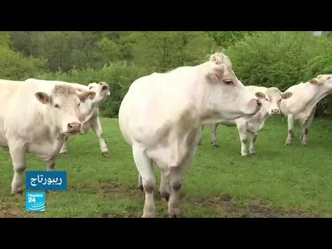 فرنسا: قرية غاجاك تسعى  لتصنيف أصوات الحيوانات وأجراس الكنائس على أنها -تراث وطني- !  - 11:55-2019 / 7 / 16