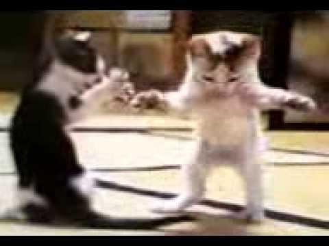 gatos bailando