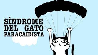 Síndrome del gato paracaidista. ¿Cómo puedes prevenirlo?