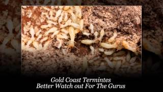Termite Detection Gold Coast | Termite Detection Dog - Mack