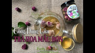 CÔNG DỤNG CỦA TRÀ HOA MẪU ĐƠN - Peony Bud Tea Health Benefits