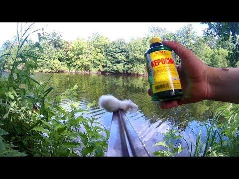 Реакция рыбы на керосин. Подводная съемка. Карась, рак