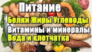 ЦИКЛ О ПИТАНИИ.  Белки. Жиры. Углеводы. Минералы и витамины. Вода и пищевые волокна.