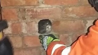 Firefighters Rescue Cat After Being Stuck in Chimney for Five Days