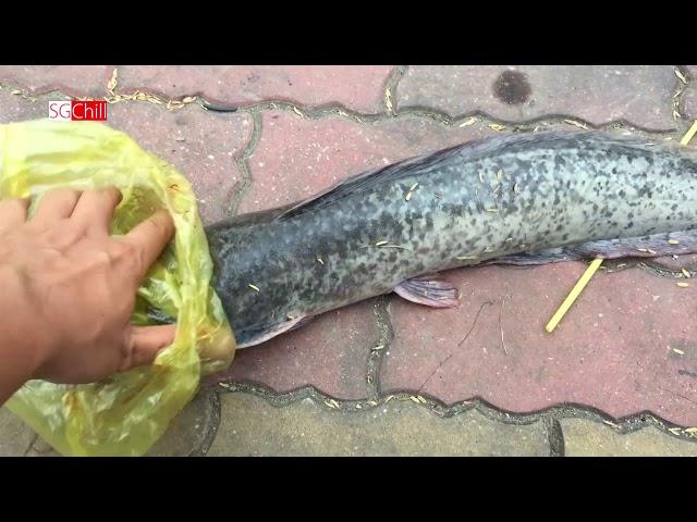 Hai Cần Thủ câu cả bầy cá trê trên sông Sài Gòn