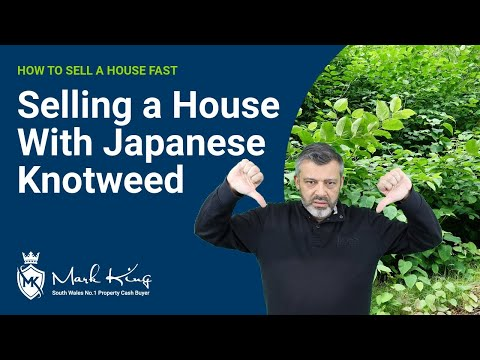 How to sell a house with Japanese Knotweed