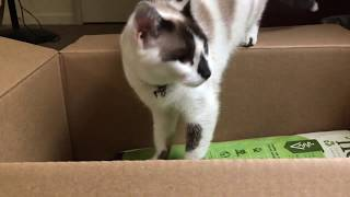 Cat Litter Unboxing With Blue's Help