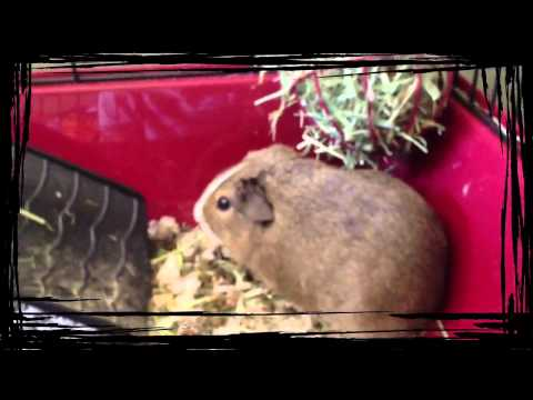 Toby in his GuineaMobile