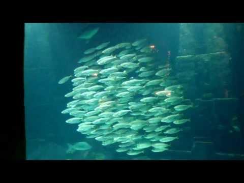 A Synchronized School Of Fish