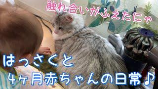 【猫】はっさくと4ヶ月赤ちゃんの日常!【サイベリアン】