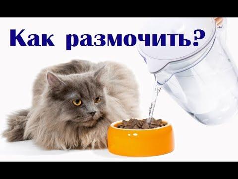 Можно ли размачивать сухой корм водой и натуралка для кошки. ВетОтвет