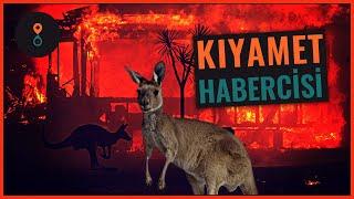 Avustralya Yangını  Kıyamet Habercisi