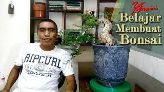 Cara Merawat Bonsai Kawista (Feronia lucida)