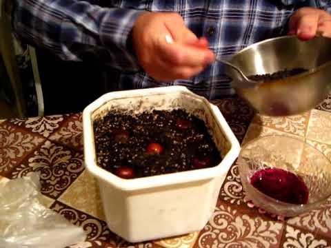 Как посадить орехи  фундука