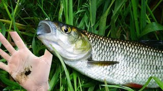 Ryba nasrała na mnie - Klenie na skórkę chleba na małej rzeczce - jak łowić