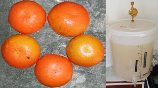 Orange Wine Recipe #1,1 - Making(Juicing Method)(24/08/2014)