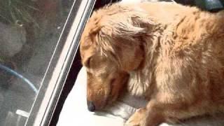 おもしろ犬PV 最終話は見て聴く、デジタル絵本動画!! ダックスフンド ...