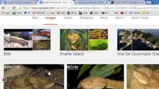 "Warning Dream: ""Snake Island"" Brazil & Egypt Sorcery & Idolatry Judgement Comes Switfly"
