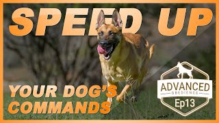 How to Speed Up Your Dogs Commands. Advanced Obedience Ep13