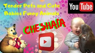 Cute and Funny Babies With Their Pets | Adorable Naughty Puppies