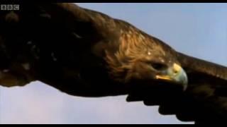 Eagle vs Hare | Predators | BBC Earth