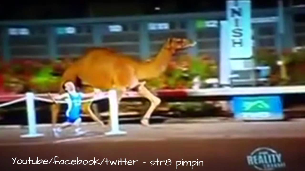 Something is. midget vs camel right! think