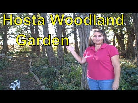 How to Create or Grow a Hosta Woodland Garden