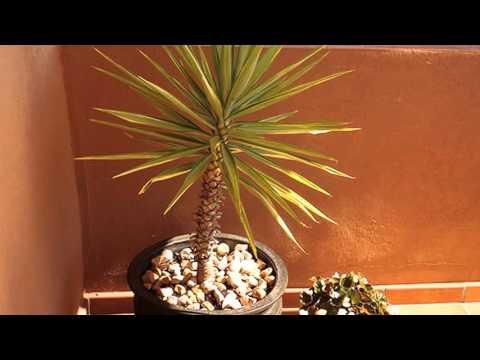 Film Penthouse Marbella Te koop