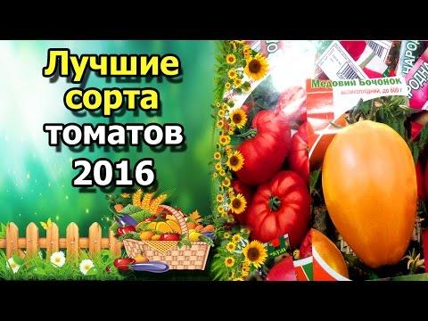 видео: 🍅Лучшие сорта томатов 2016. Любимые, вкусные и урожайные помидоры.