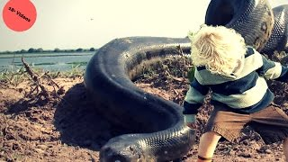 world biggest snake eating alive | ☆world biggest snake☆| Big snake eating alive