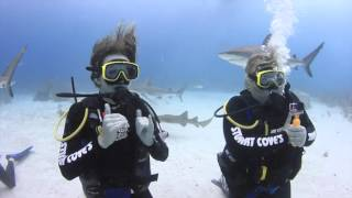 Video Stuart Cove's Shark Dive -Nassau, Bahamas -  January 18, 2016 download MP3, 3GP, MP4, WEBM, AVI, FLV Agustus 2018