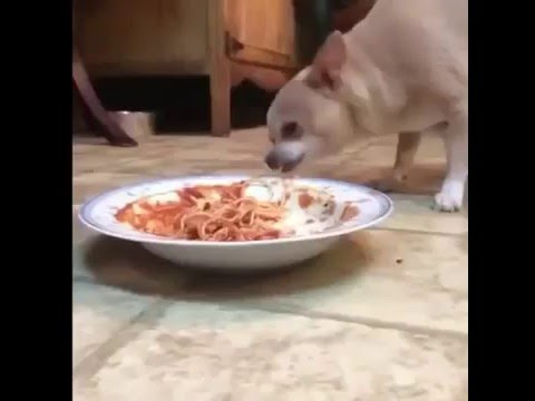 REAL LIFE: LADY AND THE TRAMP Vine