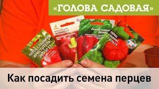 Голова садовая - Как посадить семена перцев