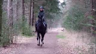 THE CHANGE OF A HORSE WITH IMMENSE FEAR FOR THE RIDER thumbnail